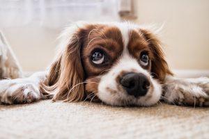 Strihanie psov závisí aj od ich srsti