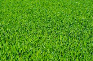 Rady ako založiť trávnik