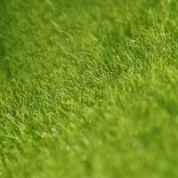 Ako založiť trávnik krok po kroku