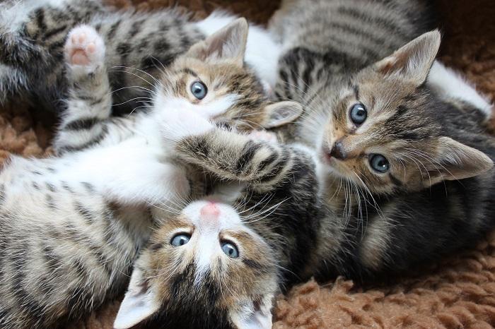 Domček pre mačky do bytu